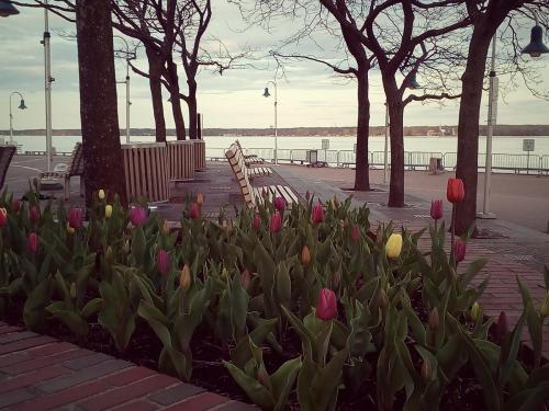 Promenade sur le bord de l'eau / Parc portuaire